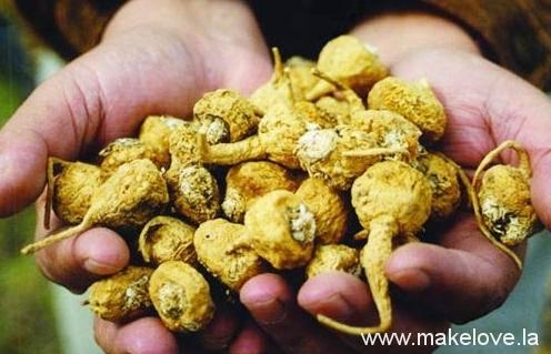 玛卡,东革阿里,卡宾树皮,辣木籽被炒作的神话