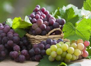 吃什么水果补肾,补肾水果葡萄图,腰膝酸软