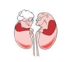 中医常说的肾虚是怎么回事啊?肾虚自我检查