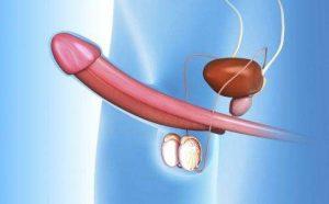 什么是器质性早泄?导致器质性早泄的因素有哪些?