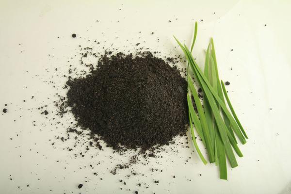 韭菜籽能治疗早泄吗?韭菜籽的食用方法是什么?