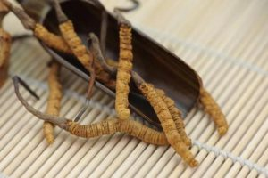 补肾吃什么?冬虫夏草能补肾吗?