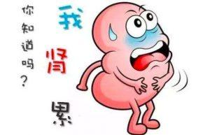哪些饮食对于我们的肾有伤害?